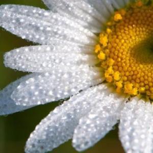 盆花要受露水才能生长良好吗