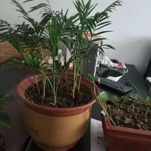 这是什么竹