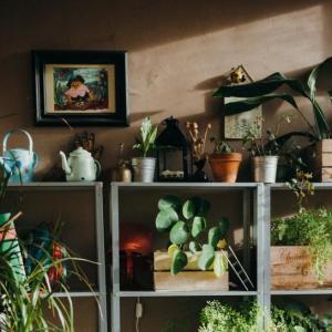 花卉植物防寒越夏时的常见问题