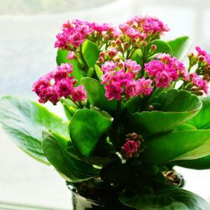 盆花常用的有机肥有哪些