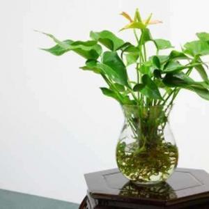 水生植物的常见问题(一)