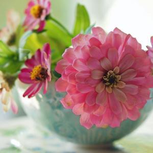 夏天哪些花不能多浇水:7种常见花介绍