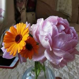 蓝色风暴还是抹布,伊芙繁华都市真棒,摩纳哥公爵终于正常大小了,金盏菊之前都是乱糟糟的黄色花瓣,现在也好多了,真是不容易😢
