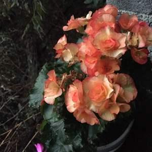 这是什么花