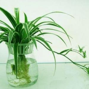 水生植物的常见问题(二)