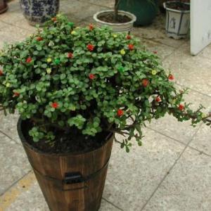 盆花浇水不容易下渗是什么原因