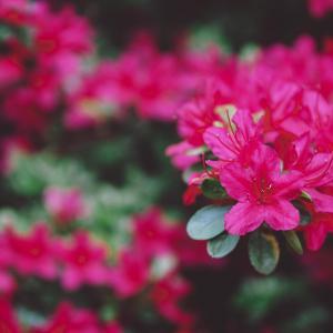 How to take care of the beautiful Fuchsia?