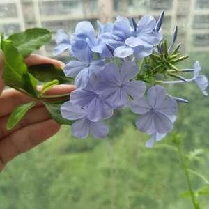 开花了 今年第一朵  今年植物都不太好长 果然天时影响过大哈哈  花盆里还多了新伙伴 不知道是不是西瓜秧子哈哈哈