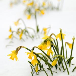 12 Best Colorful Winter Flowers for Your Garden