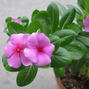 怎样调节温度才能使花卉正常生长