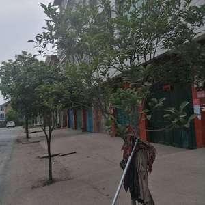 自家的桂花树怎么看起来感觉营养不良,还不开花,怎么办啊。