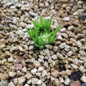 矮生大丽花和亚洲百合,种球根好开心啊,每天都有新变化,又买了好多预售球根,再给我一个阳台都种不下😂