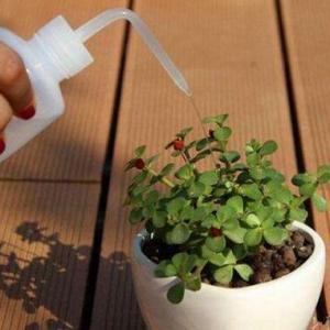 多肉植物夏天怎么浇水,15~20天浇一次水(阴雨天不浇)