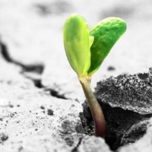 花盆土壤板结的危害及解决办法:勤松土适当施肥