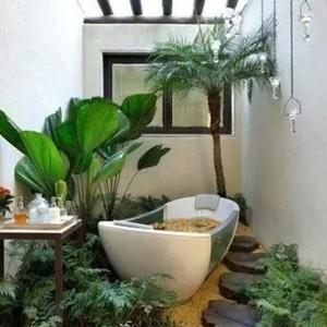 卫生间适合放什么植物?