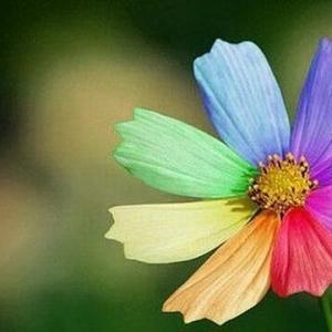 七色花真的存在吗:七色花只是人们社稷出来的一种事物,表达人们对美好事物的向往