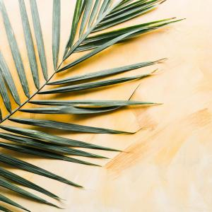 How to Take Care of Areca Palm