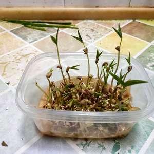 绿豆生长记