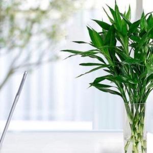竹类虫害:竹粉蠹虫