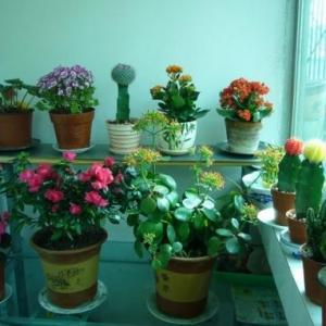 家庭养花如何合理施肥:忌浓肥|忌热肥|忌坐肥