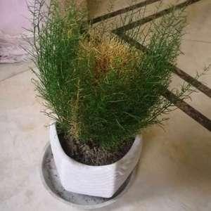 这是什么花草  ?