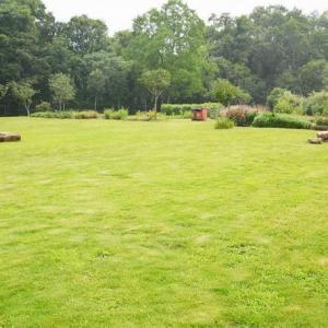 草坪类病害:草坪腥黑穗病