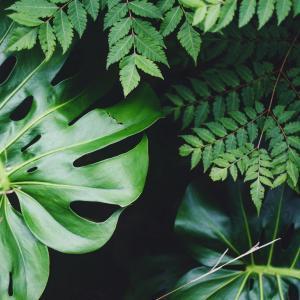 Plants Care | Prevent Bugs
