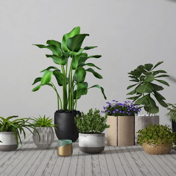 常见的室内植物都有什么功效