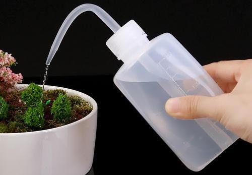 如何给多肉植物浇水