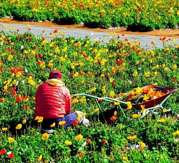 花木栽培土壤的配制