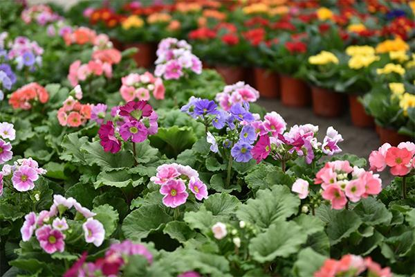 秋季怎样管理盆花?