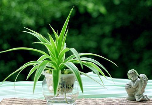 """家里水培的植物总""""烂根"""",不知道原因?其实怪在""""营养液"""""""