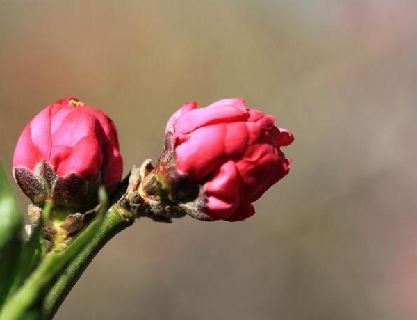 """秋天来了,用啥浇花都不如""""它"""",养啥旺啥,花开的挡不住"""