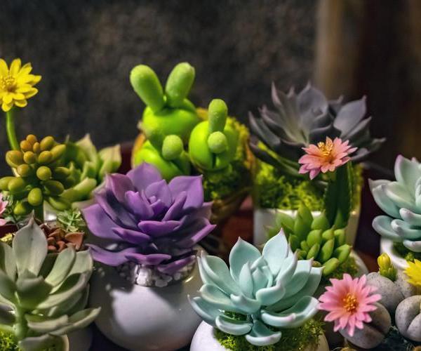 知道多肉植物为什么变色吗?