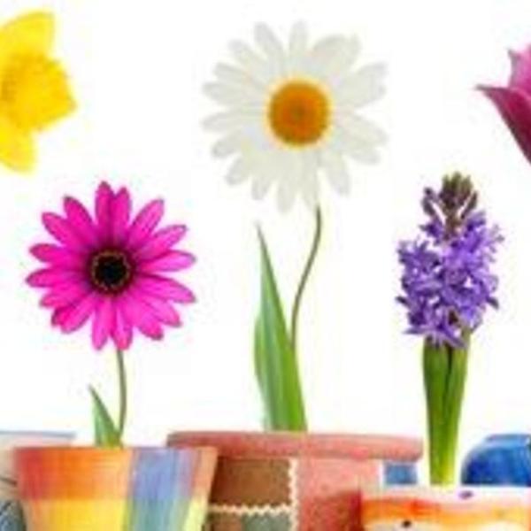 你知道不同颜色花的五行属性吗?