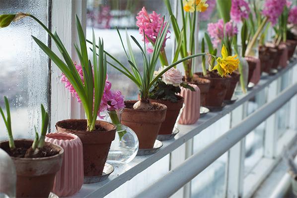 秋季当心室内花卉影响健康