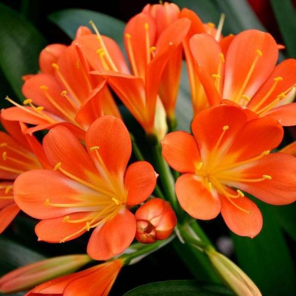 爱吃醋的5种花,兑水喷一喷,叶子变得绿油亮!