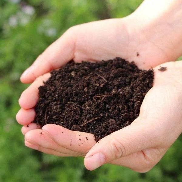别买营养土了,大爷支招,这3种东西掺一起,养花比啥都管用!
