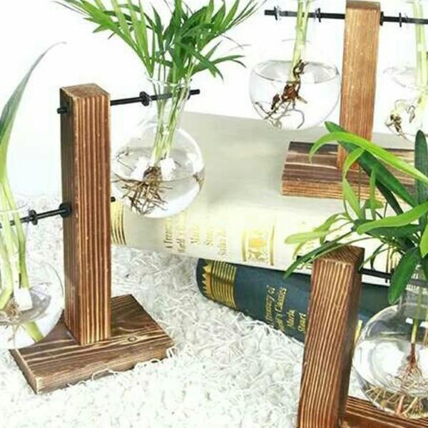 水培植物🌿冬季里的天然加湿器!