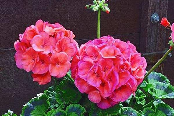 冬天之前,这3种花现在就扦插,来年花开一茬接一茬!