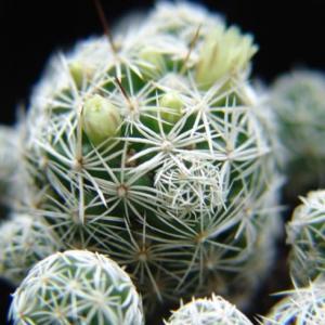 银手球  - 绿手指(GFinger)百科
