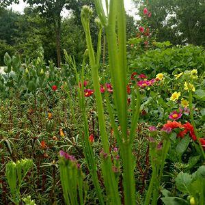 """我新添加了一棵""""勿忘我,真名,补血草,三月份播种,花期六月,土壤中性。秋播比春播好,容易分枝。养护程度容易,夏天需遮阴,冬天需防霜冻,,算是不怕冷不怕热的花卉,可播种繁殖或分株繁殖""""到我的""""花园"""""""
