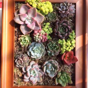 """我新添加了一棵""""相框""""到我的""""花园"""""""
