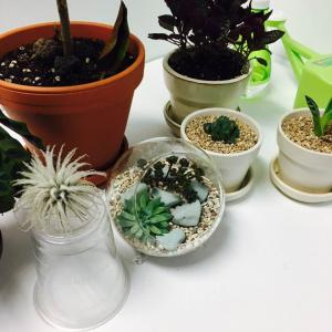 """제가 새로운 식물 """"테라리움""""한 그루를 나의 """"화원""""에 옴겼어요."""