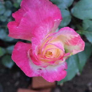 一棵树上开的花,神奇的色彩 求名