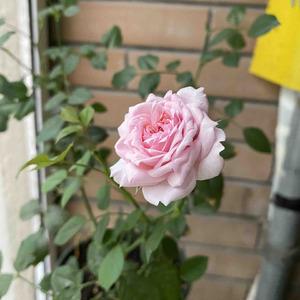 开花一朵,花型比之前的好了~