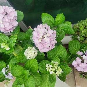 今年的花都好小~主要是没有提前施肥,哎