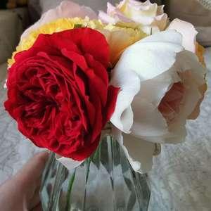 红苹果真的正,斑马耐心估计与封闭阳台无缘,开成了粉心白花
