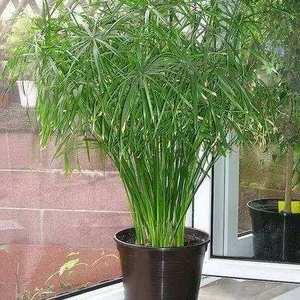 """我新添加了一棵""""水竹""""到我的""""花园"""""""