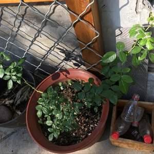 """我新添加了一棵""""藤月""""到我的""""花园"""""""
